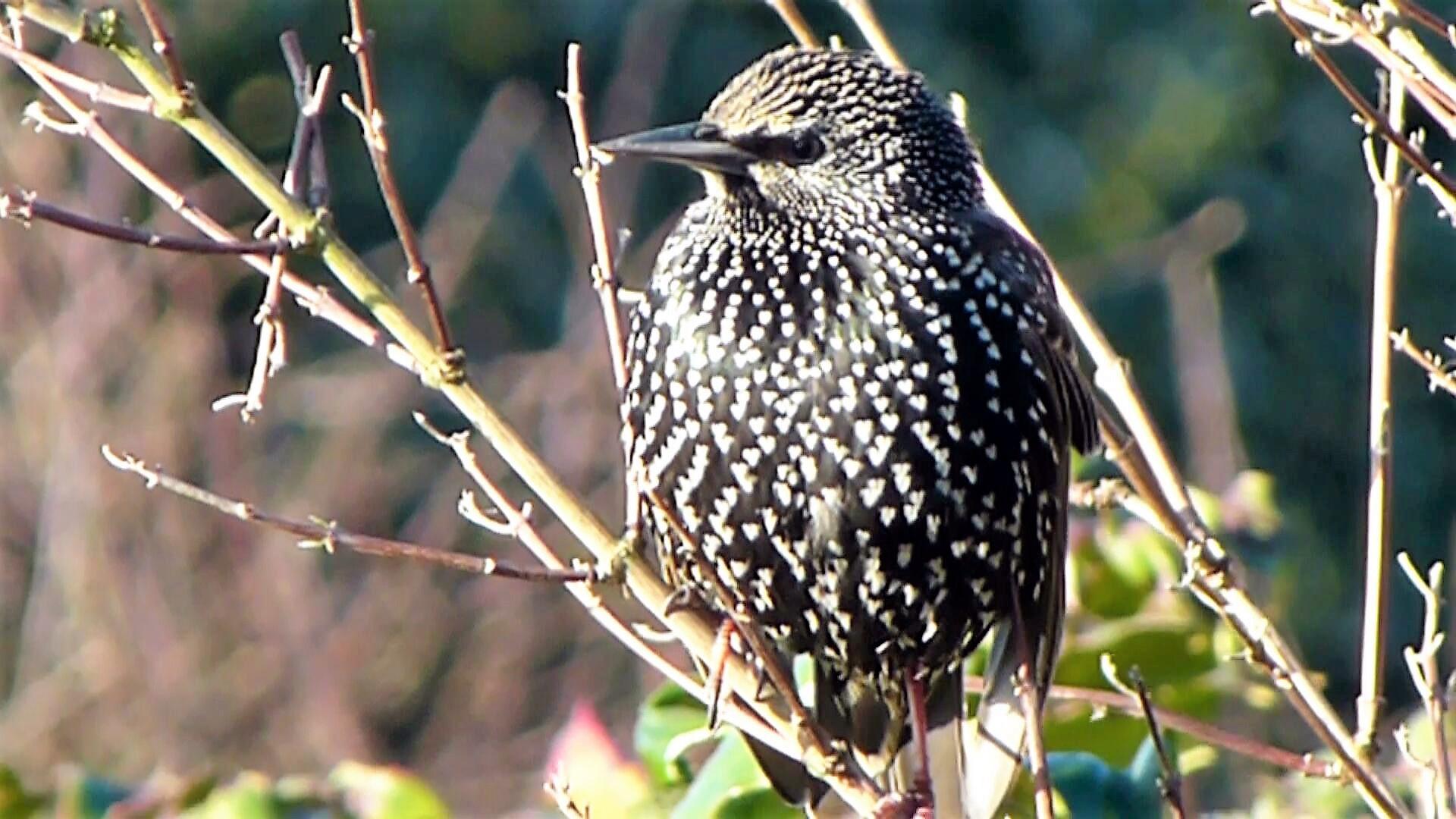 birds 3(34)