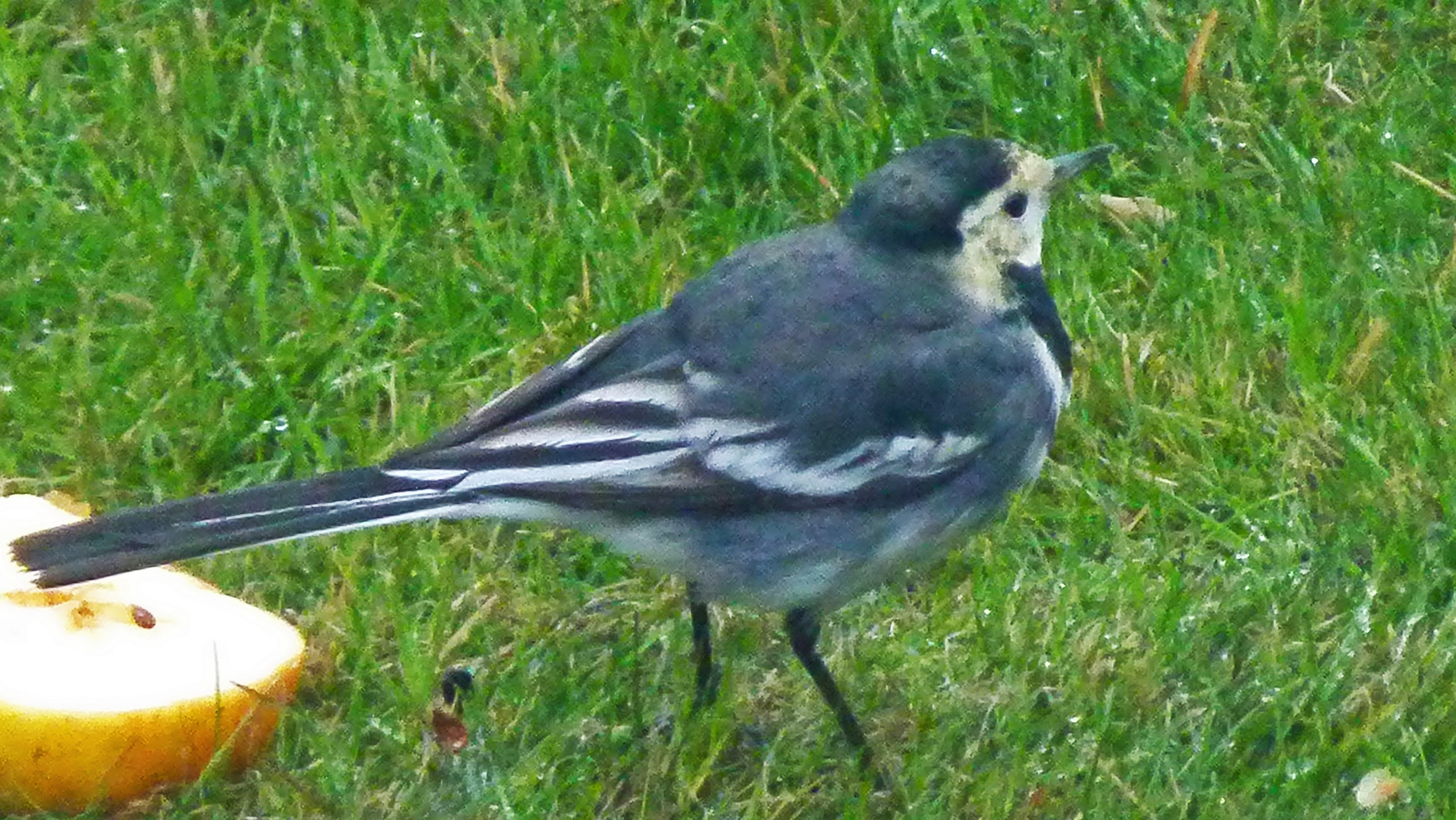birds c(64)
