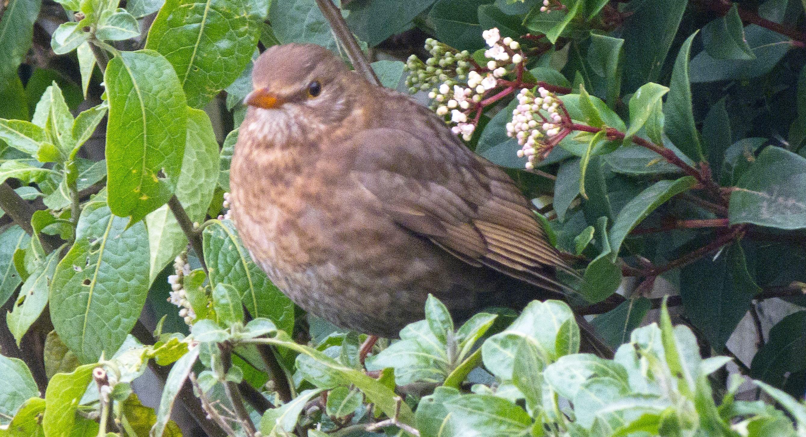 birds8 (65)