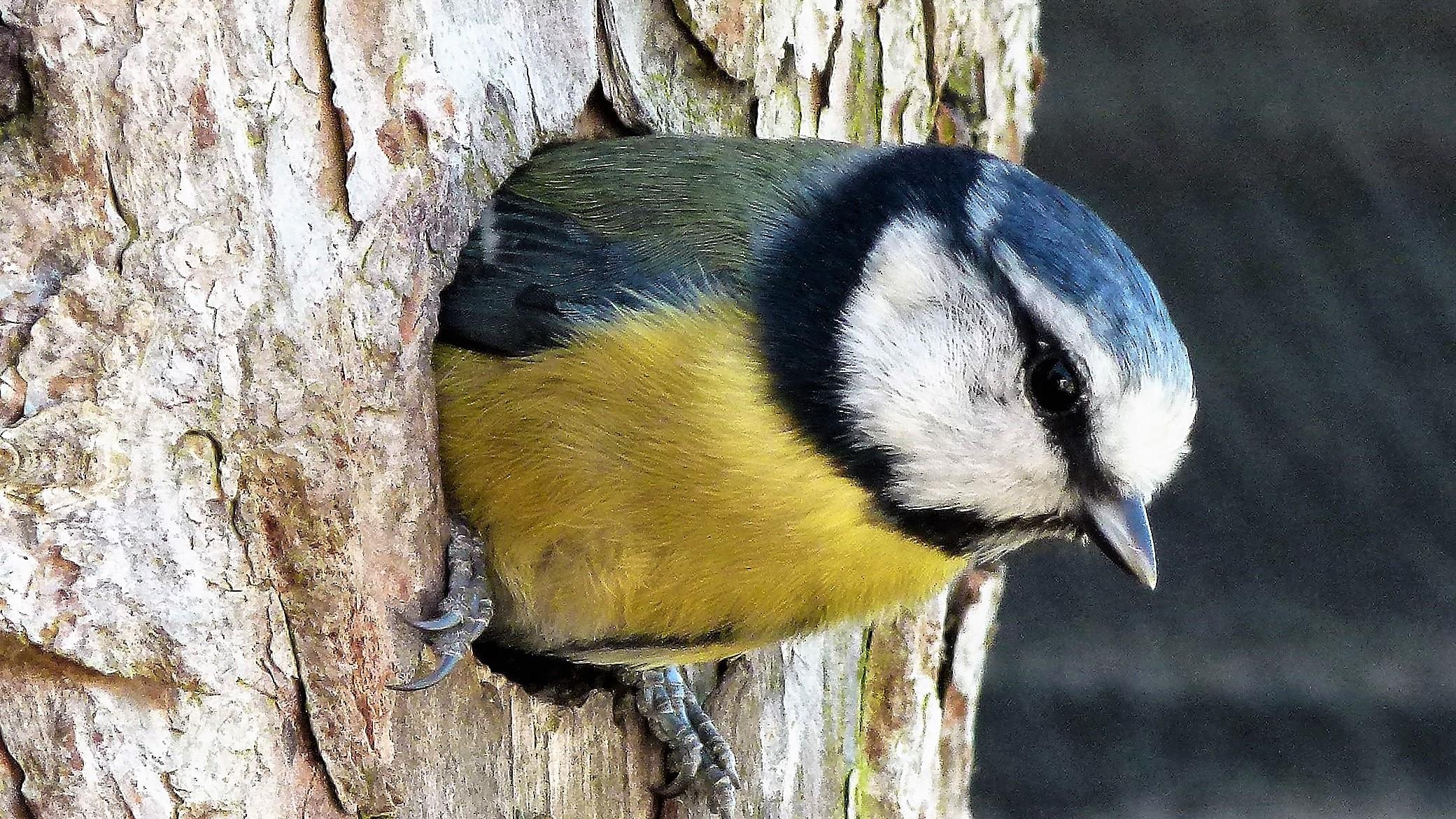 birdse (84)