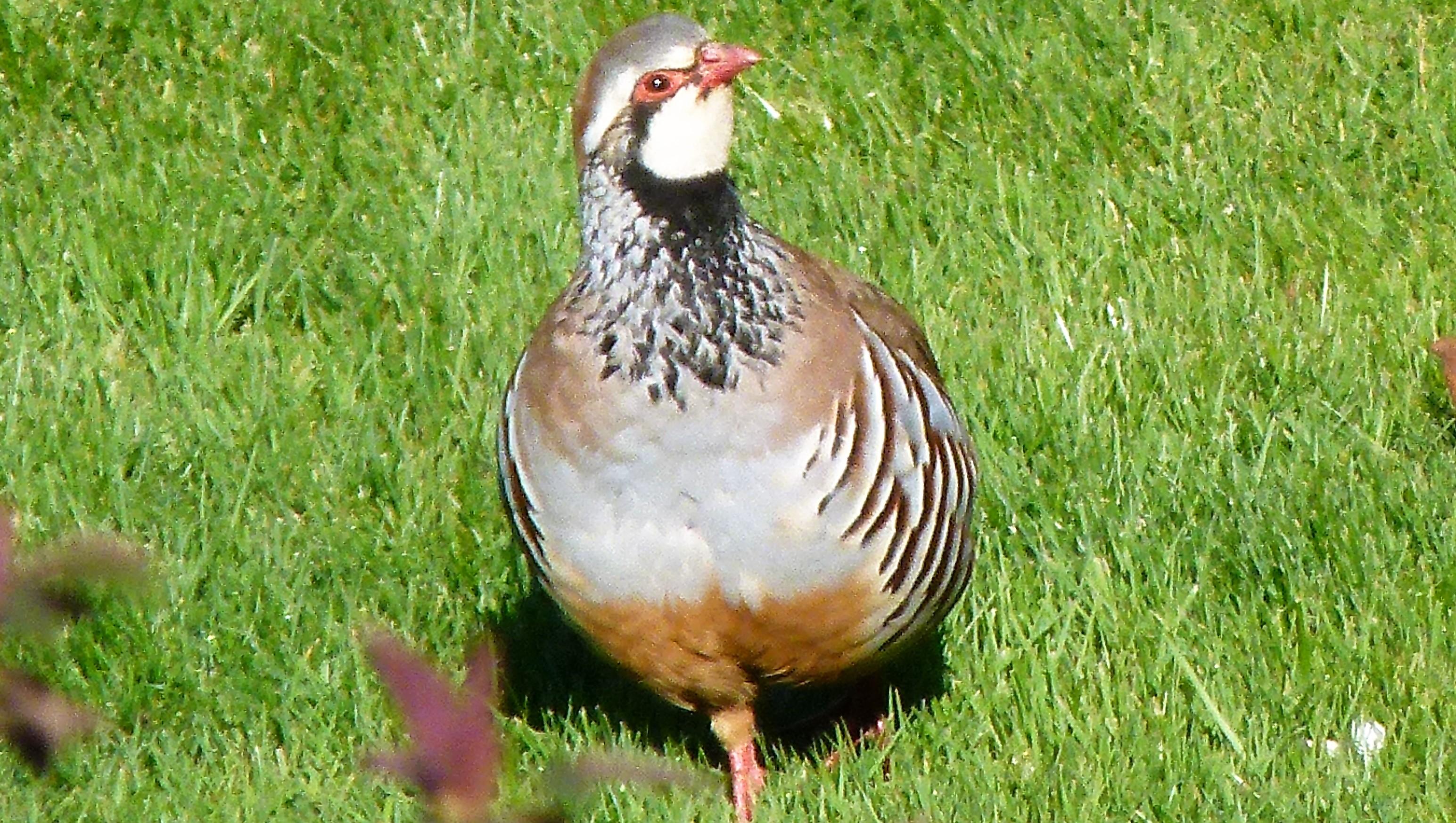 birdsf (86)