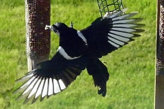 birds 7(57)