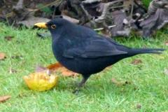 birds6 (50)