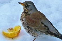 birdsd (70)