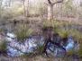 Nettlebed Ponds